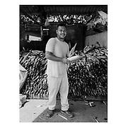 Black and white portraits of the workers in Mercado de Abasto which is  Panama city's largest farmers market. <br /> <br /> Retratos en blanco y negro de algunos trabajadores del Mercado de Abasto, el mercado de frutas  y verduras m&aacute;s grande de la ciudad de Panam&aacute;.