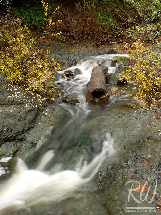 Autumn Leaves and The Inkwells, Lagunitas, California