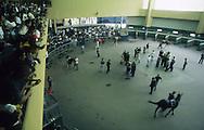 """Vista del """"padock"""". Este es el lugar donde los entrenadores dan las instrucciones de último minuto y pasean al animal antes de la carrera para el asombro e inspección de los espectadores.  View of padock, where the horses walk before the race. (Ramón Lepage/Orinoquiaphoto)"""