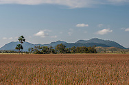 A savanna pond with Kusad Mountain in the distance.
