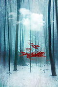 Small red tree in a Winter forest - manipulated photograph