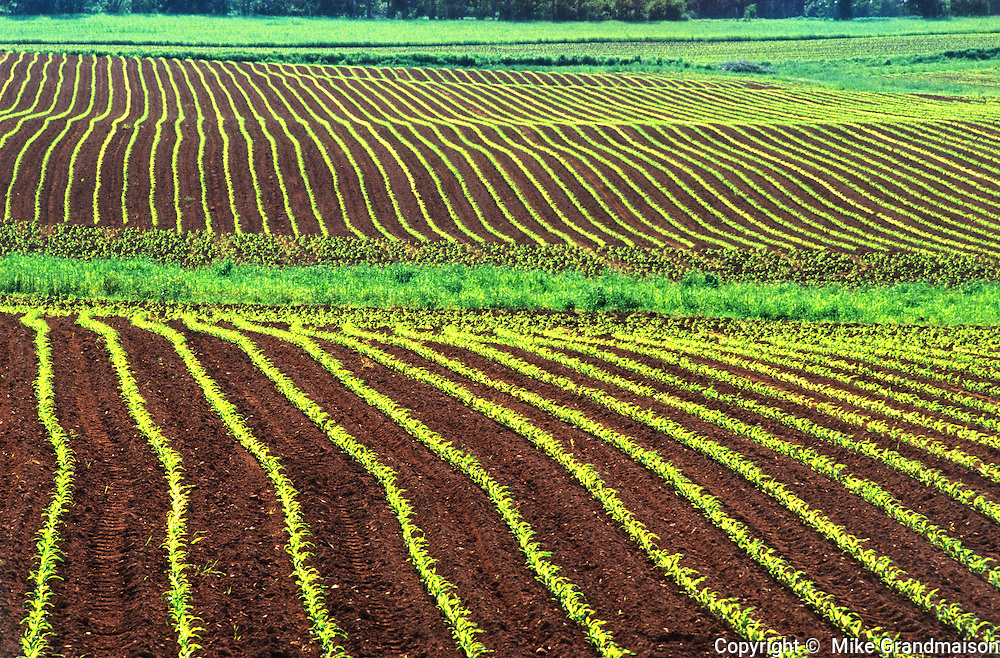 Early growth corn and red soil<br /> <br /> Prince Edward Island<br /> Canada