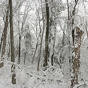 Winter Woods in Breakheart Reservation, Wakefield, MA