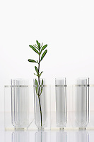 Plant in test tube with three empty test tubes