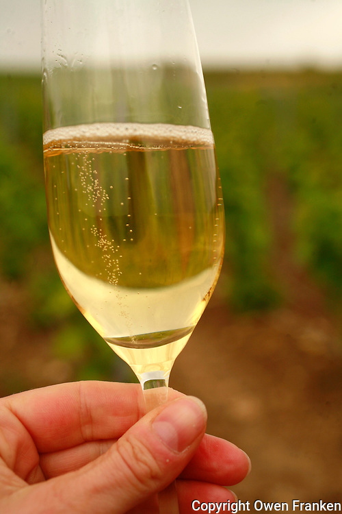 hand holding a glass of Champagne in a vineyard in France