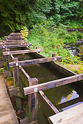 Flume at Cedar Creek Grist Mill, Clark County, Washington