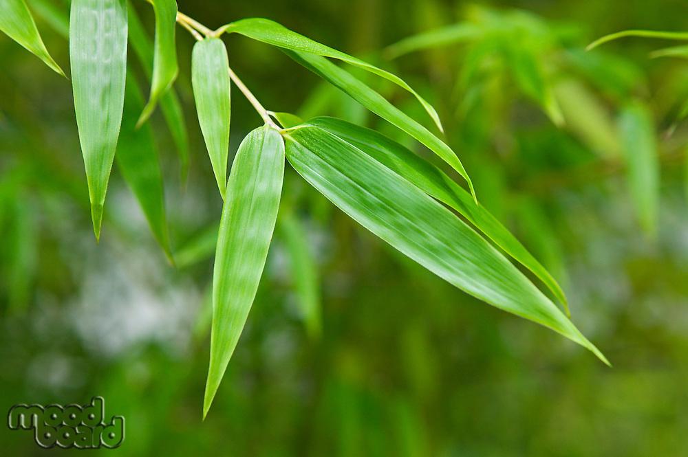 Japan Himeji Himeji Koko-en Gardens plant close-up