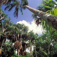 Morichal, Delta Amacuro, Venezuela