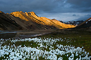 Landmannalaugar in south Iceland.
