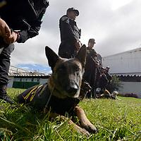 LERMA, México.- (Octubre 05, 2017).- Binomios caninos de la Secretaria de Seguridad del Estado de México (SSEM) trabajan todos los días resguardando la seguridad de los habitantes del Edomex, capacitados para detectar armas, drogas, localizar a personas, entre otras de sus actividades. Agencia MVT / Crisanta Espinosa.