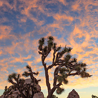 Sunrise clouds on a cool August morning in the Joshua Tree National Park, 29 Palms, CA.