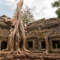 "According to ""Wikipedia"" - The temple of Ta Prohm was abandoned after the fall of the Khmer empire in the 15th century, and neglected for centuries. When the effort to conserve and restore the temples of Angkor began in the early 20th century, the École française d'Extrême-Orient decided that Ta Prohm would be left largely as it had been found, as a ""concession to the general taste for the picturesque."" According to pioneering Angkor scholar Maurice Glaize, Ta Prohm was singled out because it was ""one of the most imposing ""temples"" and the one which had best merged with the jungle, but not yet to the point of becoming a part of it"". Nevertheless, much work has been done to stabilize the ruins, to permit access, and to maintain this condition of apparent neglect""."