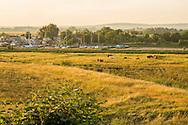 View towards Oare Creek, cattle in meadow