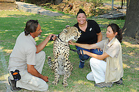 STELLENBOSCH, SOUTH AFRICA - Wednesday 20 January 2016, Megan Wakefield with Phoenix the cheetah during the launch of Springbok 7's new jersey with Steinhoff International as sponsor at the Markotter Indoor facility in Stellenbosch.<br /> Photo by Roger Sedres/ImageSA