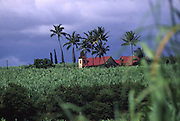 Sugar Cane Fields & Church, Waimea, Kauai, Hawaii<br />
