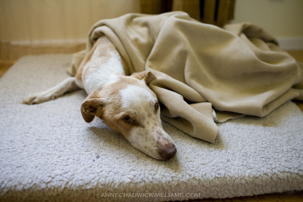 Ollie, a once stray and starving dog, is rescued into a new, loving home