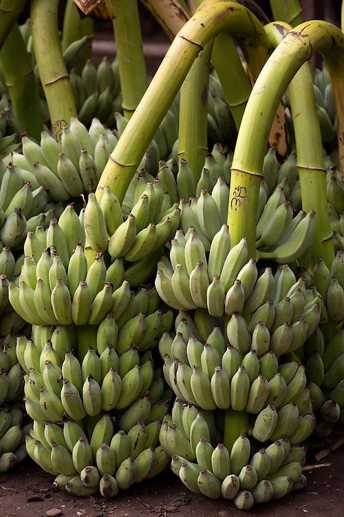 Asia, Myanmar, Burma, Yangon, bananas for sale in market