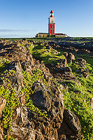 Rugged rocky coastline of Bird Island with the lighthouse in the background, Bird Island, Algoa Bay, Eastern Cape, South Africa