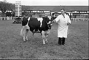 "20/02/1963.02/20/1963.20 February 1963.RDS Bull Show. Mr. William Sweetnam, Kilpatrick House, Bandon, Co. Cork, with his Friesian bull ""Ballinroher Carl"", winner of Class 31 (for bulls calved from 1 March to 30 June 1962)."