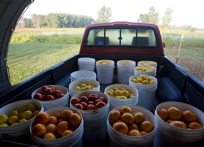 Nitty Gritty Dirt Farm a CSA  owned and run by Gigi Nauer and Robin Raudabaugh