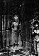 Apsarases carved into the walls of Ta Prohm. An Apsaras is a female spirit of the clouds and waters in Hindu and Buddhist mythology.