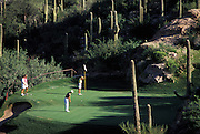 View from above of Desert golfing at its finest, a long put attempt with golfer ready to pull the flag, Ventana Canyon Golf and Racquet Club, Tucson, Arizona..Media Usage:.Subject photograph(s) are copyrighted Edward McCain. All rights are reserved except those specifically granted by McCain Photography in writing...McCain Photography.211 S 4th Avenue.Tucson, AZ 85701-2103.(520) 623-1998.mobile: (520) 990-0999.fax: (520) 623-1190.http://www.mccainphoto.com.edward@mccainphoto.com