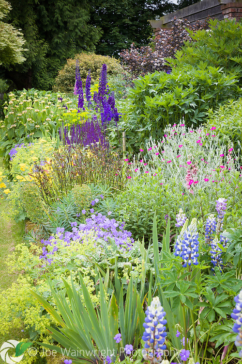 Luxuriant planting provides a rich display of colour at Abberywood Gardens, Cheshire - photographed in June.
