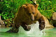 USA-Alaska-Bears