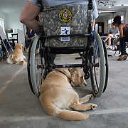 BOYDS, MD - SEP09: Veteran Rory Ready, works with his service dog Maria, at the Warrior Canine Connection in Boyds, Maryland. (Photo by Evelyn Hockstein/For The Washington Post)