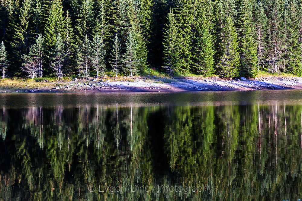 Reflections of a green pine forest in a lake with crystal water