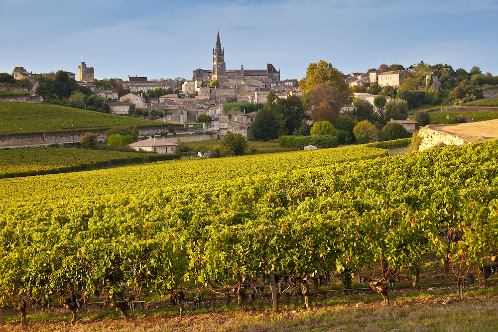 Ripe black grapes in vineyard and the town of St Emilion in the Bordeaux wine region of France
