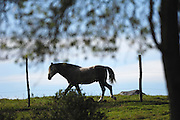 Ecuador, May 26 2010: Profile of a horse standing between fence posts at Hacienda San Agustin...Copyright 2010 Peter Horrell