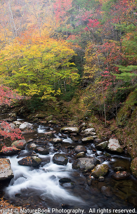 Misting rain, flowing stream and fall color create a beautiful setting in Great Smoky Mountains National Park