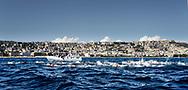 Race at Napoli<br /> 52 a Capri - Napoli<br /> FINA Open Water Swimming Grand Prix 2017<br /> September 3rd, 2017 - 03-09-2017<br /> &copy;Giorgio Scala/Deepbluemedia/Inside foto