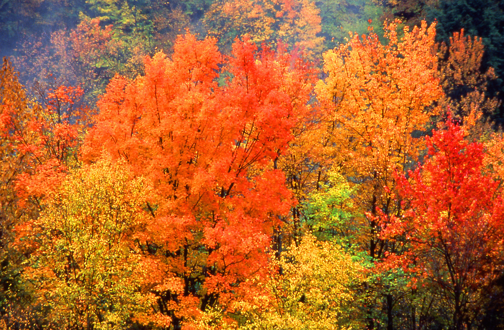 Allegheny National Forest, Autumn foliage, Pennsylvania