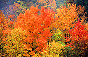 Allegheny National Forest, Autumn foliage, Pennsylvania