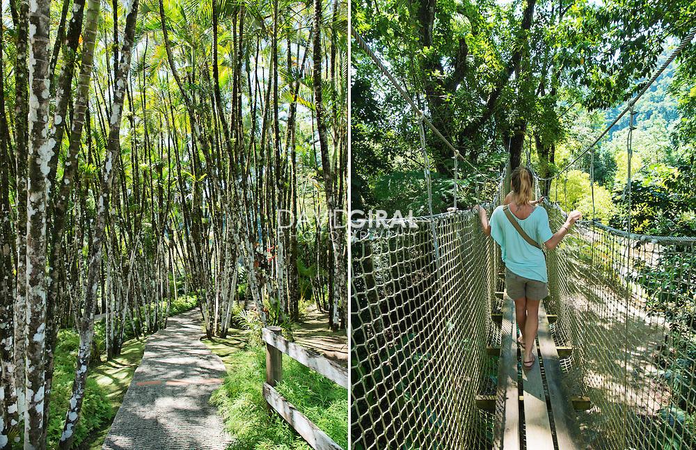 Editorial Travel Photography: Jardin de Balata, Balata botanical garden, Fort De France, Martinique Island, Caribbean Sea, Lesser Antilles, France