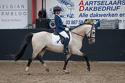 015, Clint Eastwood From Serenity Stables<br /> Hengstenkeuring BRP<br /> 3de phase - Hulsterlo - Meerdonk 2018<br /> © Hippo Foto - Dirk Caremans