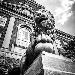 University of Cincinnati Lion black and white picture. The lion is named Mick and is outside of McMicken Hall at the University of Cincinnati. Mick and Mack are two stone lions and were a gift to the University of Cincinnati in 1904. Image is vertical, high resolution and was taken in 2012.