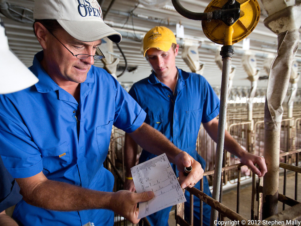 Tom Dittmer (from left) and Ben Dittmer show a tracking card for a pig in a gestation building at Grandview Farms in Eldridge, Iowa on Thursday August 9, 2012.