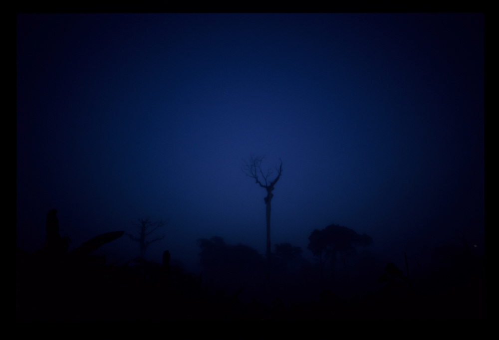 Parintins_AM, Brasil...Castanheira morta em meio a floresta Amazonica em Parintins no estado do Amazonas...Chestnut tree dead in the Amazon forest  in Parintins in Amazonas State...Foto: JOAO MARCOS ROSA / NITRO