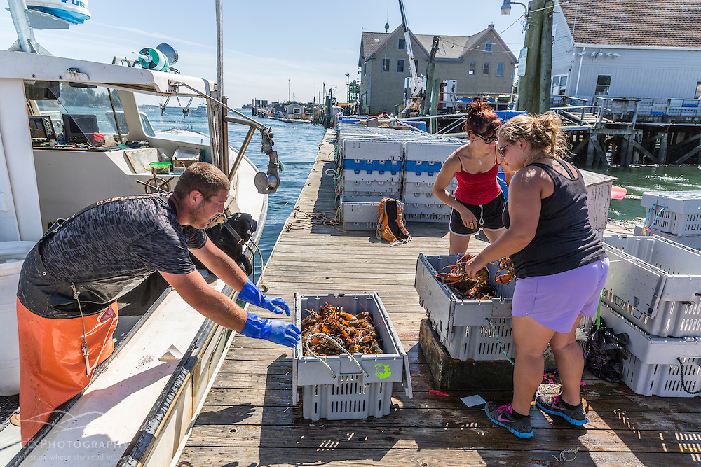 Sternman Eric Murray unloads lobster from 'Afternoon Delight' at the Vinalhaven Fishermen's Co-op in Vinalhaven, Maine. Buyers Karen Krager (in red) and Emilia Doak weigh the catch.