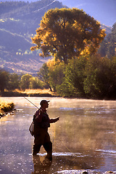 Stock photo of a fisherman flyfishing the Upper Yampa during the fall outside of Steamboat Springs, Colorado.