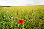 Somme 100 Anniversary