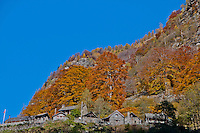 Orange and golden autumnal trees above a stone village in the Valle Onsernone in  Ticino, Southern Switzerland.