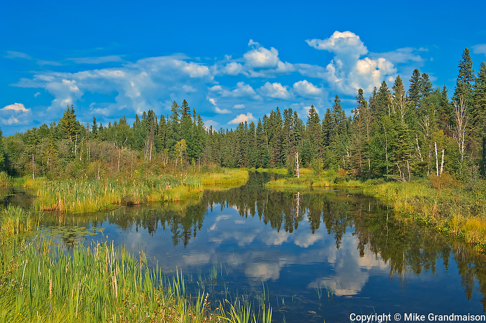 Wetland on North Star Road<br />