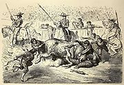 Un Banderillo en danger [A Banderillo in danger - small victory to the bull] Page illustration from the book 'L'Espagne' [Spain] by Davillier, Jean Charles, barón, 1823-1883; Doré, Gustave, 1832-1883; Published in Paris, France by Libreria Hachette, in 1874
