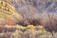 Lovely pastel colors of winter cottonwood trees, willow and sagebrush in the canyon country of the San Rafael Swell in Southern Utah, USA