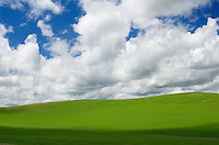 Puffy white clouds over green wheat fields of the Palouse region of the Inland Empire of Washington