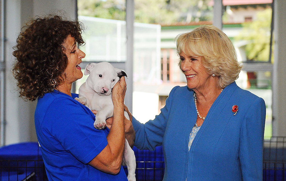 Camilla, Duchess of Cornwall visits the Wellington SPCA and looks through the puppy room, Wellington, New Zealand, Saturday, November 07, 2015. Credit:SNPA / Getty, Mark Tantrum **POOL**
